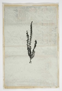 Larry Abramson, Das kleine Blumenbuch - after Rudolf Koch (Heidekraut), 2014, oil and screen-print on newspaper, 56x37 cm