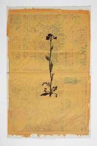 Larry Abramson, Das kleine Blumenbuch - after Rudolf Koch (Wiesenschaumkrant), 2014, oil and screen-print on newspaper, 56x37 cm